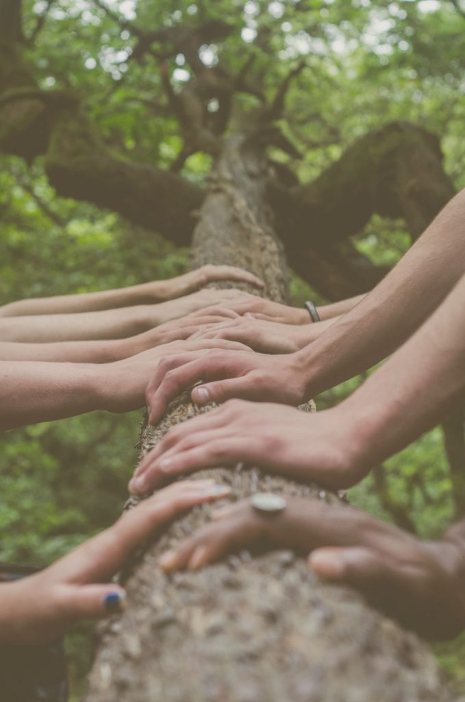 A variety of hands touching the trunk of a tree